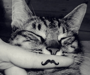 cat, happy, and smile image