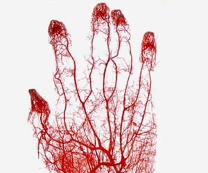 hand, blood, and red image