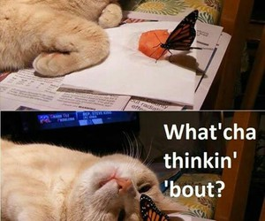 animal, butterfly, and cat image