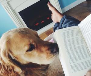 books, dog, and pet image