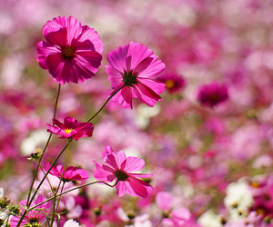 cut, flower, and japan image