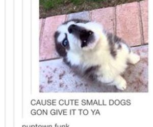 puppy, cute, and uptown funk image