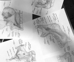 anatomia, anatomy, and b&w image