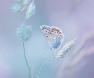 butterfly image