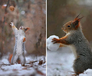 squirrel, animals, and photography image