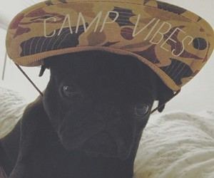 costume, dog, and funny image