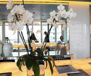 orchid white room image