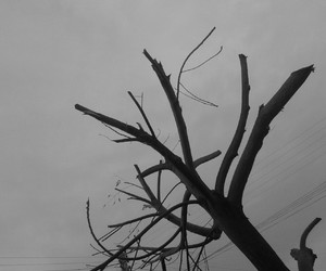 amazing, dark, and branches image