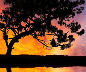 sunset, tree, and reflection wow image