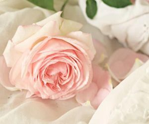 beautiful, rose, and flowers image