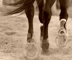 hooves, horse, and sepia image