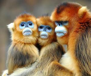 monkeys and primates image