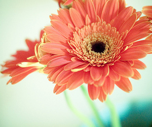 365, 50mm, and flowers image