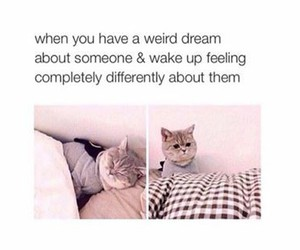 funny, Dream, and cat image