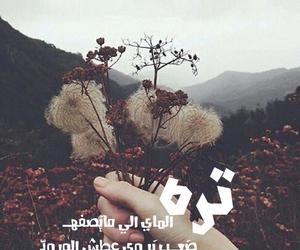 arab, des, and iraq image