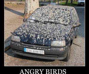 angry birds, funny, and car image
