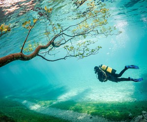 tree, water, and austria image