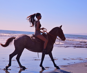 beach, corse, and horse image