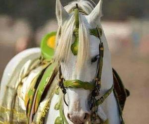 arabian and horse image