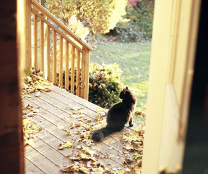 black, cat, and garden image