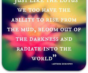 bloom, mud, and world image