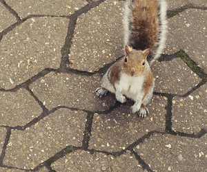 adorable, animal, and squirrel image