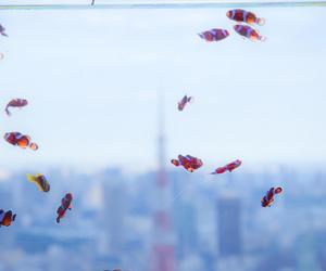 fish, water, and nemo image