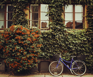 flowers, bicycle, and photography image