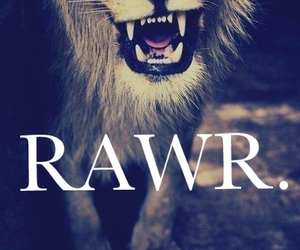 lion, miau, and rawr image
