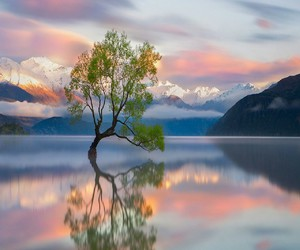 tree, nature, and lake image