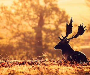 deer, nature, and trees image