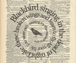 blackbird, beatles, and song image
