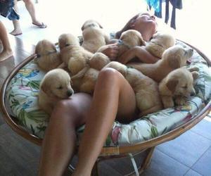dog, tiny, and puppy image