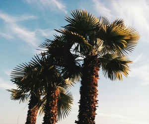 palm trees, paradise, and summer image