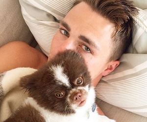 colton haynes, dog, and puppy image