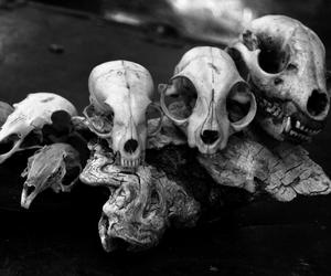 black and white, bones, and varnuak image