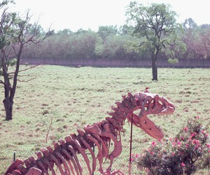 dinosaur, flowers, and phography image
