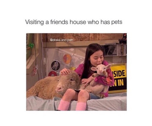funny, pets, and friends image