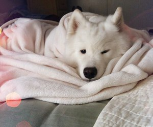 dog, white dog, and white dog in the bed image