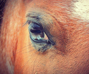 cheval, eyes, and horse image