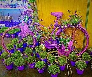 bike, color, and flower image