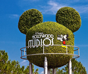 disney, hollywood, and mickey mouse image