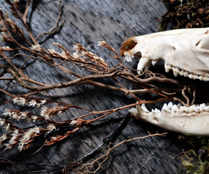 bones, Dead Flowers, and photography image