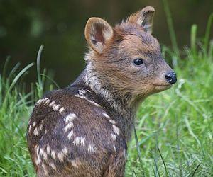 cute, deer, and animal image