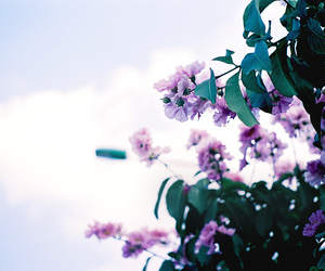 35mm, analog, and blue image