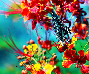 butterfly, flower, and aoao2 image