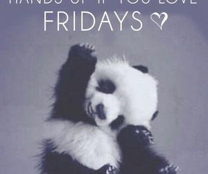 friday, hands up, and panda image