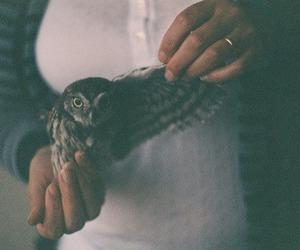 animal, animals, and vintage image