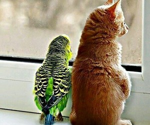 cat, bird, and animal image