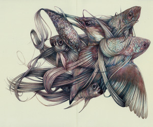 drawing, fish, and flora and fauna image